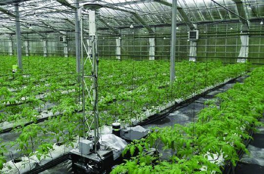 GreenPatrol, ingeniería robótica agrícola contra las catástrofes